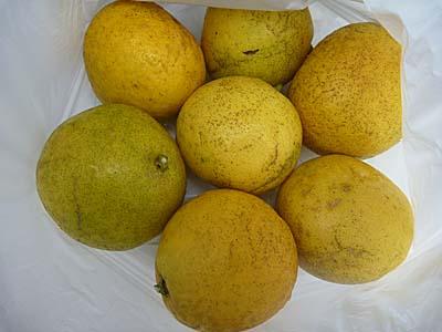 ニューサマーオレンジ 7個