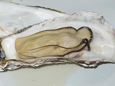 志津川産 宮城 牡蠣の酒蒸し 殻をむいたところ